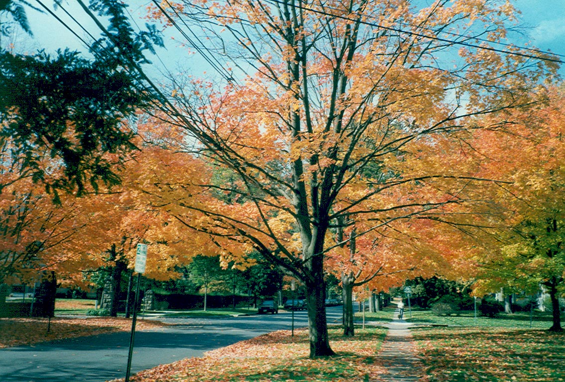 Prospect Avenue of Princeton, a scene of Autumn