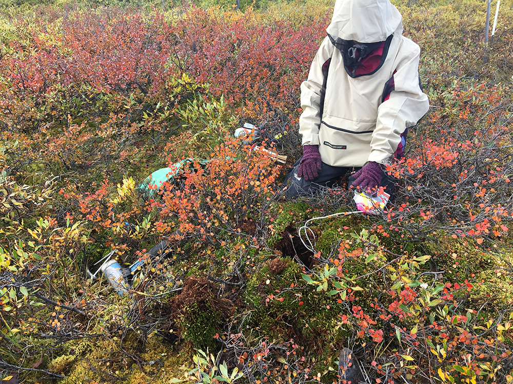 This summer, Sophy Wu, a second-year Ph.D. student studying aerospace engineering, conducted fieldwork at the University of Alaska Fairbanks' Toolik Field Station, a premier research laboratory established in 1976 for studying the Arctic and its relationship to the global environment.
